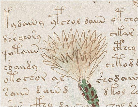 manuscrit de voynich 2015