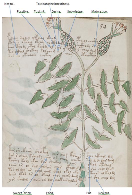 Voynich plant names | Stephen Bax